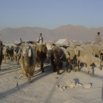 Nomads taking their animals through the camp. The livestock is to be sold on the nearby bazaar. In the camp, however, not many people can afford meat. Photo: Jens Kjær Jensen, 2003
