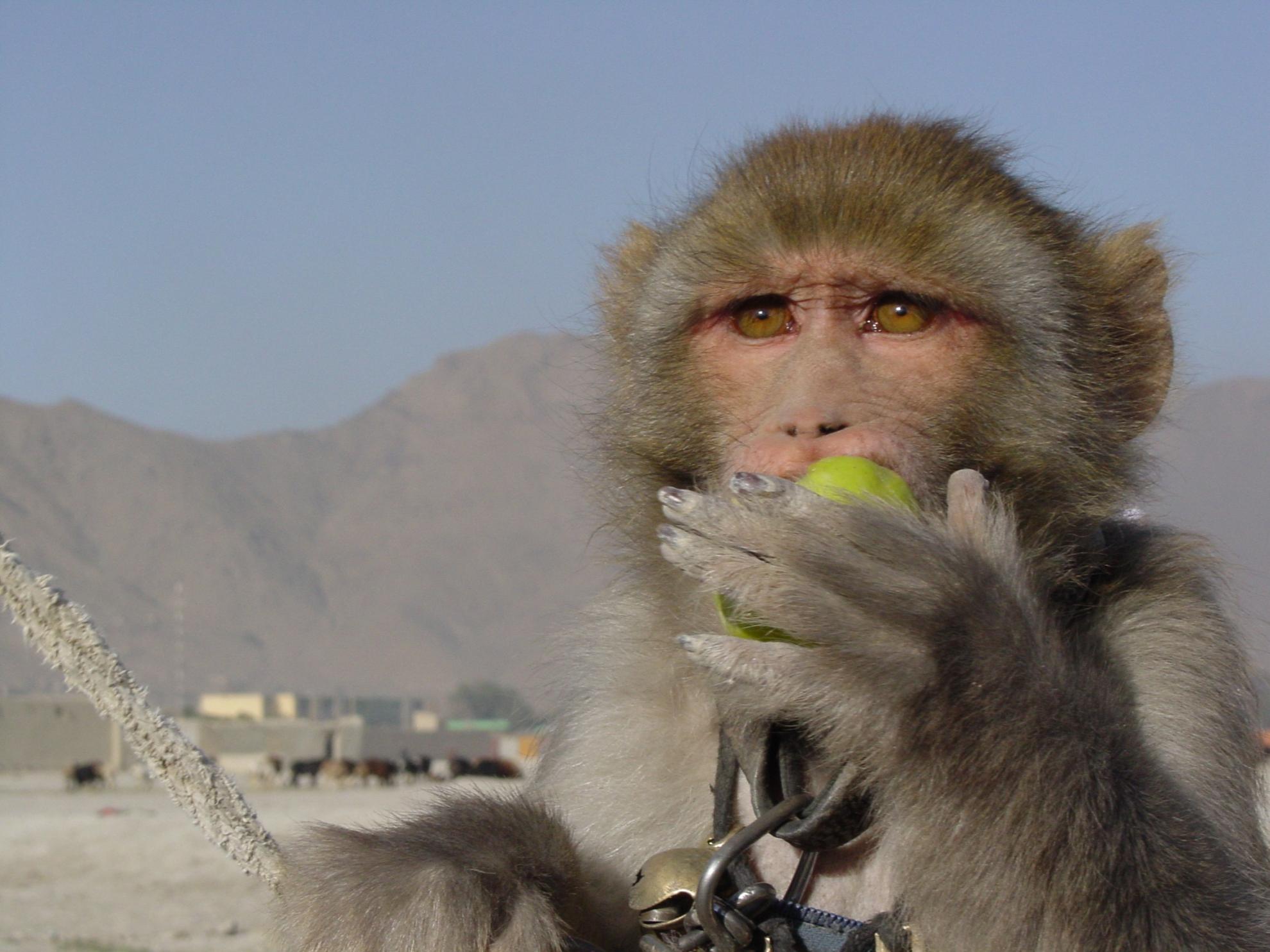 En af lejrens beboere prøver at tjene penge på sin abe. Foto: Jens Kjær Jensen