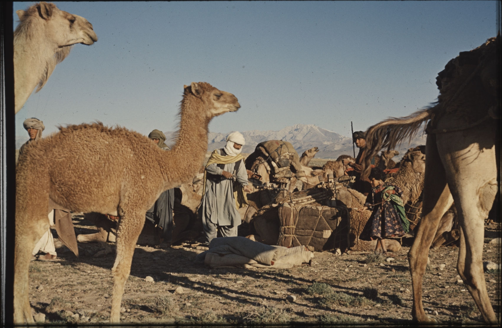 The belongings of the nomads are packed upin a very particular manner. Photo: Jean Bourgeois, 1968