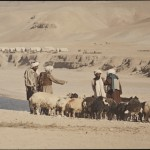 One of the primary sources of income for the nomads is animal trade. Here the Chakcharan nomad bazaar in Hazarajat. Photo: Jean Bourgeois, 1968
