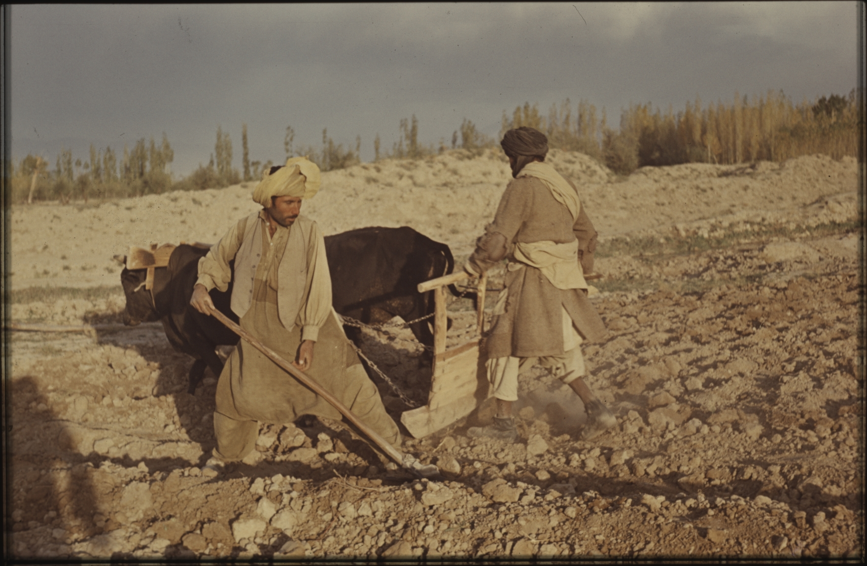 A group of nomads have bought a piece of land to make their living as farmers. Many nomads find this difficult, however, as they have no knowledge of agriculture. Most fail to sustain themselves and may eventually be forced to sell the land and return to nomadic life. Photo: Jean Bourgeois, 1969