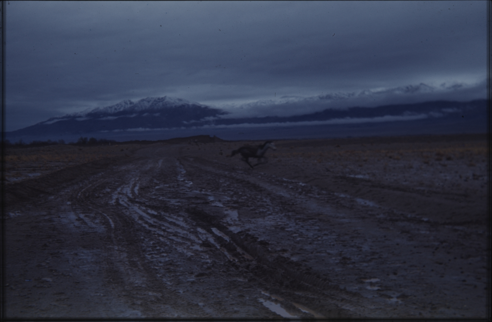 A road was often little more than a muddy track. Note the horse crossing. The Henning Haslund-Christensen Memorial Expedition, 1953-'55. Photo: the Moesgaard Museum archives