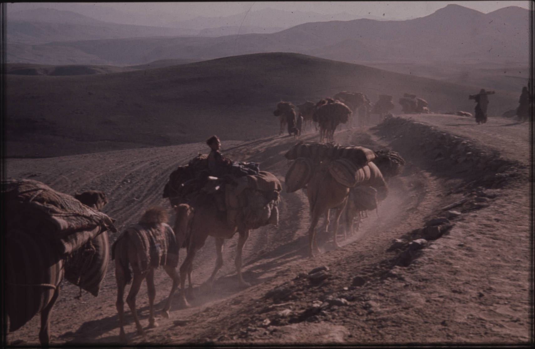 Nomads use camels to transport their belongings. An adult camel can carry approximately 300 kilos. The nomads respect their animals very much and never overburden them. The animals are their basis of life. Photo: Jean Bourgeois, 1968